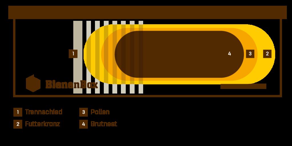 Illustration des Innenlebens der BienenBox