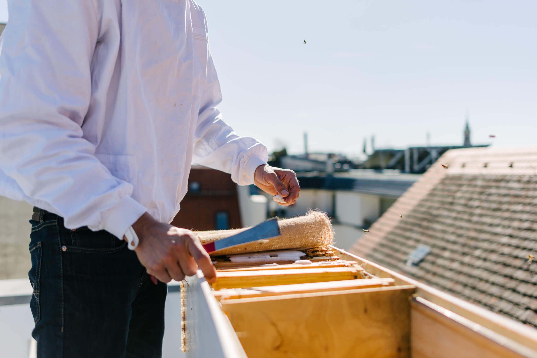 Durchsicht der BienenBox