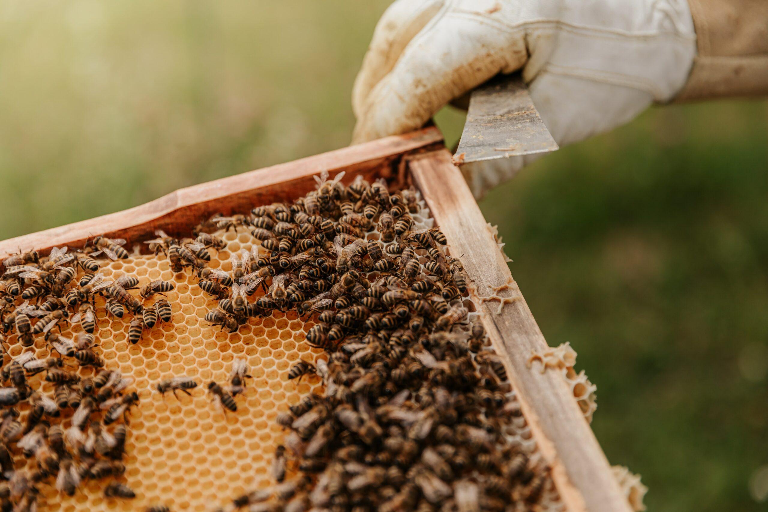 Durchsicht im Bienenstock