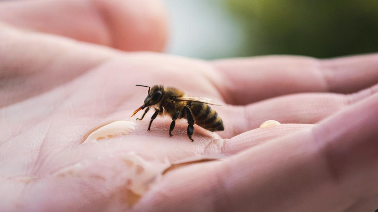 Honigbiene auf der Hand