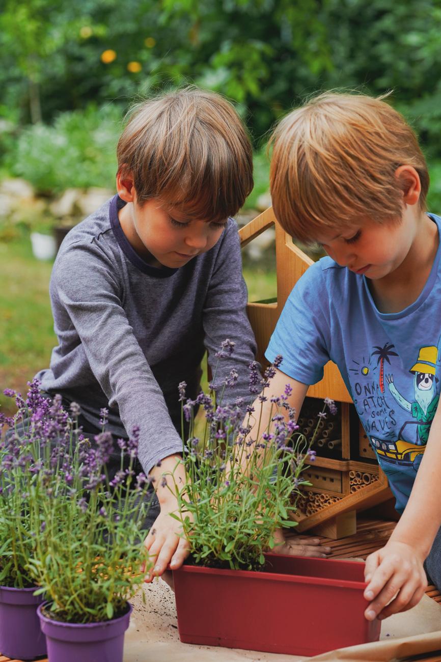 Bienenfreundlicher Lavendel für die Wildbienen