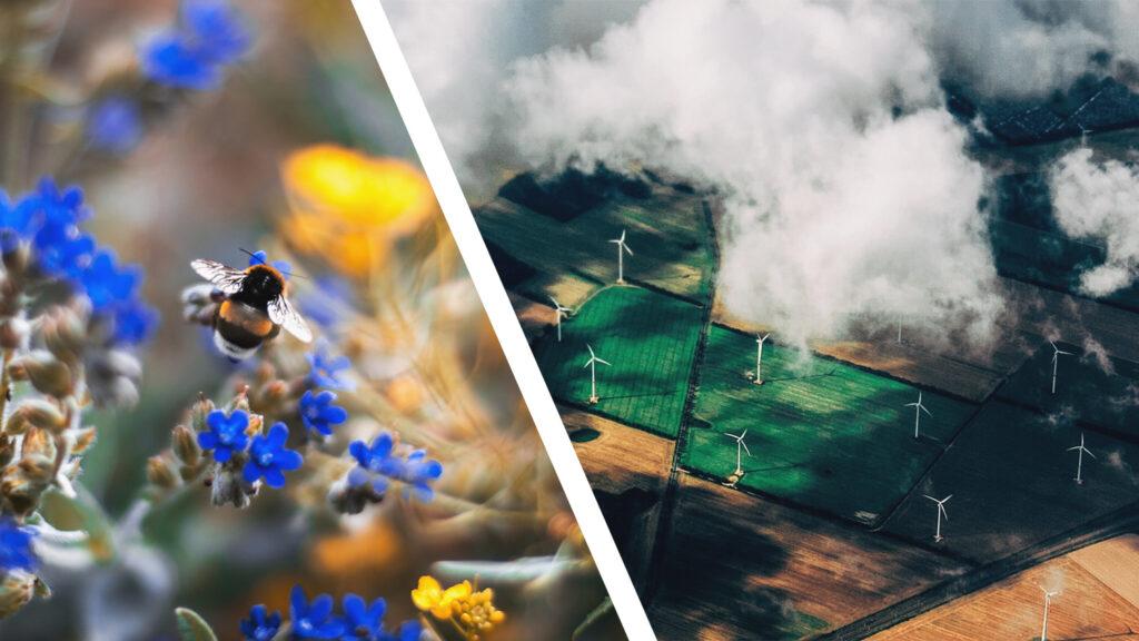 Wildbienen - Etwas Gutes in einem schlechten System