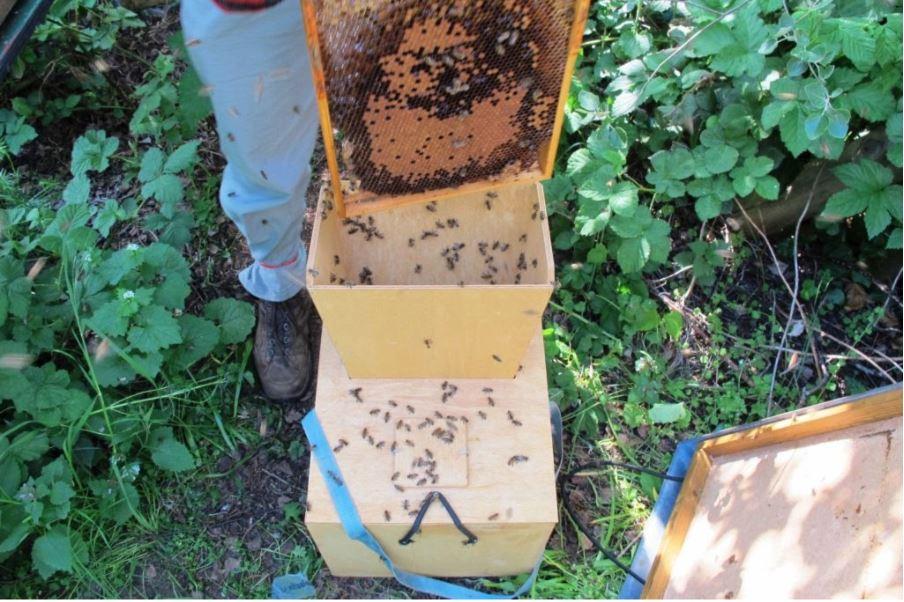 Abstoßen der Bienen
