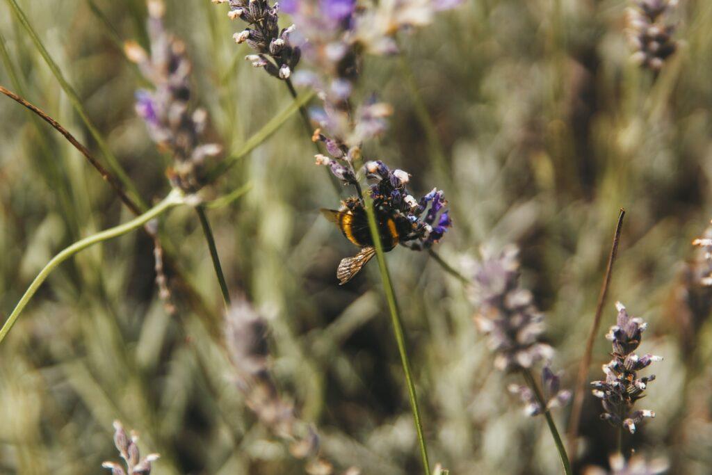 Über Stadtbienen